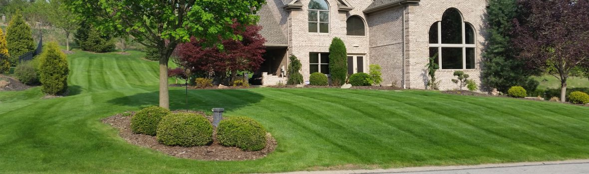 From Grass Cutting Lawn Fertilizing And Weed Control To